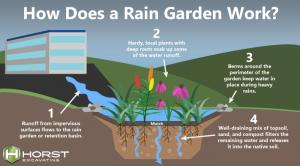 diagram of how rain garden works