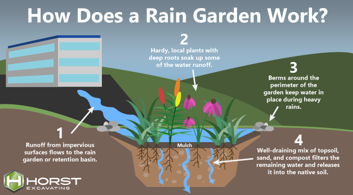 diagram of how rain garden works